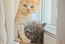 cats / by Photography by Alison