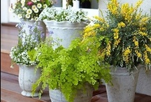 garden and patio / Whether it's my backyard, patio or front yard, these are the images I love and hope to incorporate in my own yard one day. / by Photography by Alison