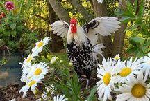 Chicken Breeds / Chicken Breeds