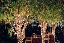 Gardening/Floral Tips / by Mary Styrczula Ameriks