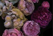 Colours / Colour combinations I like / by Jenny Housley