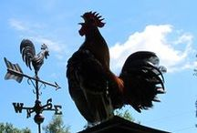Weathervanes / by Kathy, The Chicken Chick®