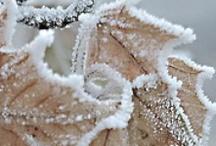 I N S P I R A T I O N … Winter / by ashlynSTYLISToliveLOVESalfie