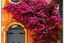 Doors / by Teri Clark