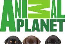Animal Planet / Everything Animal Planet