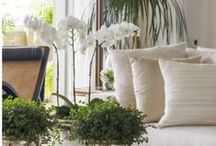 Townhouse client / by Daphne, Published Interior Designer