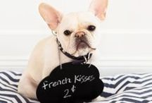 Frenchies / by Christine Parker