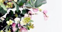 Florals / Pretty pretty florals