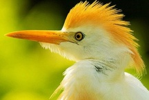 Glorious Birds / by Kala Ambrose
