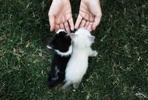 Cute & Lovely