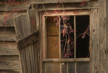 Doors & Windows / by Diane Dunn
