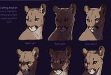 Animal Anatomy & Tutorials