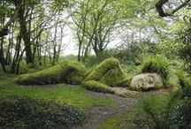 Moss / Lichens & Mosses on trees, on statues, on houses & cars