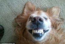 Happy Faces / Smiling Animals