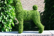 Topiary / Living shrubs and trees clipped into animal shapes also some Moss filled topiary animal frames