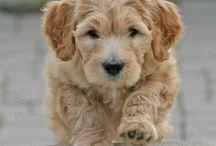 Too Cute! / by Dawn Farley