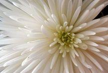 Love for White / by Dawn Farley