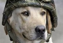 """""""Cane Milite"""" / Soldier Dogs  / by Roy Gooden"""