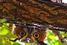Feathered Friends / by Dawn Farley