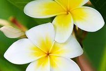 My favourite flowers / by Hazel Foo