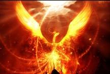 animals - Phoenix