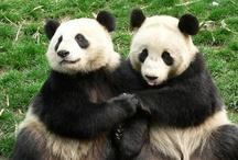 Pandas to make you smile / by Anna Eaton