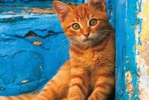 Cats in Greece / Eat your heart out! Cats are connoisseurs of comfort, enjoy this compilation of stray cats in Greece!