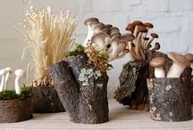 GOOD Inspiration: Mushrooms