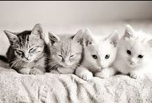 Kitty / Cats are the ultimate best friends =^.  .^=