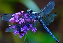 Dragonflies! Heavens messengers. / by Jamie Tuberville