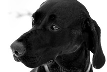 """Dog Photography / Fantastic photos of """"Man's Best Friend"""". By The Dog Snapper, UK pet photography service."""