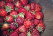 Spring Sweetness! Strawberries / In the latest issue of World Ark Magazine, Heifer Farm's resident gardening expert shares some tips for growing strawberries in your garden, in a container, or wherever you find a bit of earth this spring!   / by Heifer International