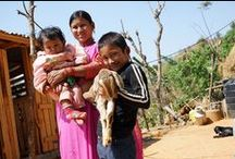 The Nepal Earthquake: Gita's Story / On May 12th, 2015 Nepal experienced a devastating aftershock —a 7.2 magnitude quake— less than a month after enduring its largest temblor in 80 years.   Gita Shakya and her children Safel  (10) and Sambridhi (11 months) are survivors of this disaster. With the help of her goats and a women's group, Gita is recovering from the devastating quake and rebuilding a future for herself and her family.  / by Heifer International