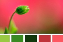 Color Ideas-3 / by Colleen Whale
