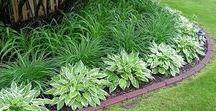 Outside/Plants