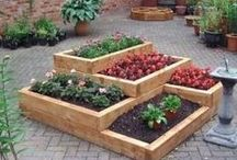 Garden Beds / Whether you have contaminated soil or a bad back, raised beds can be an excellent garden solution, particularly for veggies.