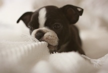 Perfect Pups