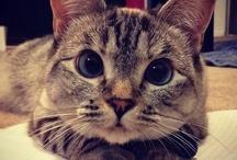 Meow / by Ellen Simon