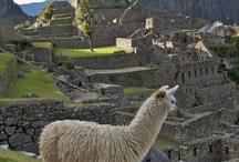 Peruvian Treasures