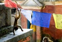 globerockin' Nepal / Freiweilligenprojekte in Nepal mit AIFS