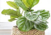 Garden- House/Indoor Plants
