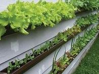 Garden Up & Down / Vertical gardens, hanging plants, climbing plants- anything that gets the plants off the ground and makes use of vertical spaces.