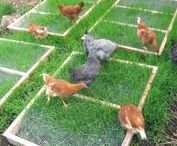 Garden Livestock / Chickens, Rabbits, Cats, Dogs, Bees, Birds (in nature) - how to nurture them or attract them.