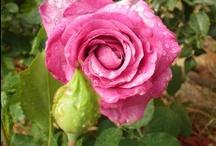 Flowers / by Angela McCoy Horn