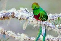 I have a bird board...(Costa Rica!!!)