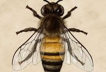 Bees / Bee Hive