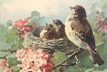 Bird Love / by Patricia Gasparino