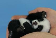 cute animals / by Clare Ashton