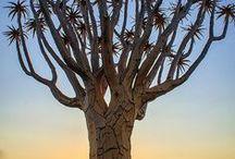 Bäume / by Paula Kuhl