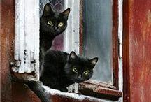 Black cats & kittens